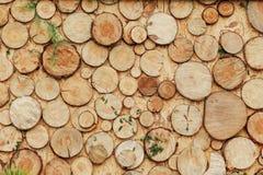 Деревянная зона фото с украшением зеленых растений Стоковые Изображения