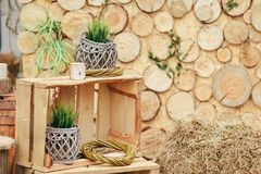 Деревянная зона фото с украшением зеленых растений Стоковое Фото