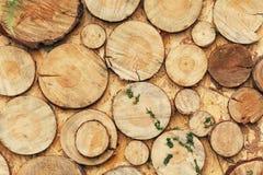 Деревянная зона фото с украшением зеленых растений Стоковая Фотография