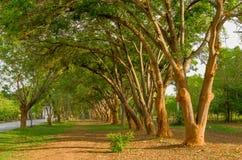 Деревянная линия и растущая зеленая трава на поле Стоковое Фото