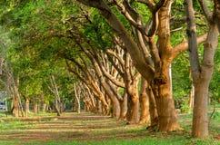 Деревянная линия и растущая зеленая трава на поле Стоковая Фотография