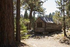 Деревянная кабина в лесе, Big Bear, Калифорния, США Стоковые Фото