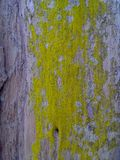 Деревянная картина Стоковые Изображения