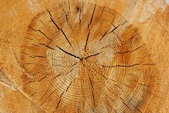 Деревянная концепция крупного плана текстуры стоковое изображение rf