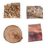 Деревянная кора дерева текстуры Стоковые Изображения