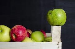 Деревянная коробка вполне свежих яблок Стоковое Фото