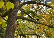 Деревянная коробка птицы в дереве Стоковое Изображение RF