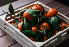 Деревянная коробка свежих tangerines с листьями Стоковые Фотографии RF