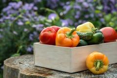 Деревянная коробка с свежими овощами (томатом, огурцом, болгарским перцем) Стоковые Фото
