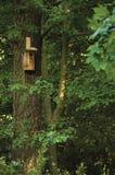 Деревянная коробка тимберса птенеца гнезда, дом птицы starling, большие стволы дерева и ветви, birdhouse в листве солнечных древе Стоковые Фото