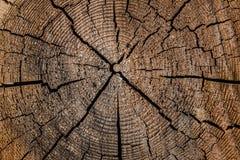 Деревянная круговая картина текстуры стоковое фото