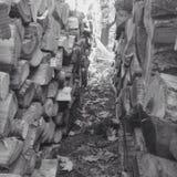 Деревянная куча Стоковое Фото