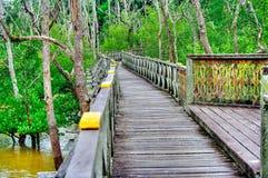 Деревянная обсерватория моста планки леса мангровы в дождевом лесе Борнео Малайзии Стоковые Фото