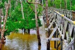 Деревянная обсерватория моста планки леса мангровы в дождевом лесе Борнео Малайзии Стоковые Фотографии RF