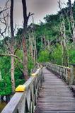 Деревянная обсерватория моста планки леса мангровы в дождевом лесе Борнео Малайзии Стоковые Изображения RF