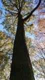 Деревянная область Стоковая Фотография