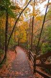Деревянная дорога в золотом лесе падения стоковые фотографии rf