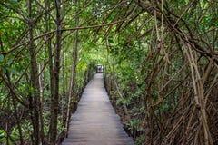 Деревянная дорога среди джунглей стоковые изображения