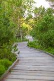 Деревянная дорожка внутри в национальном парке Adrspach-Teplice трясет - чехию Стоковые Фотографии RF