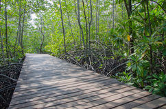 Деревянная дорожка в лесе мангровы Стоковое Изображение RF