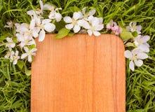 Деревянная доска и ветвь цветка яблони Стоковое фото RF