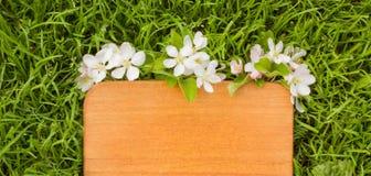Деревянная доска и ветвь цветка яблони Стоковая Фотография