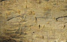 Деревянная доска Стоковые Фотографии RF