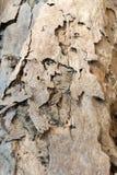 Деревянная поверхность поврежденная термитом стоковое изображение rf