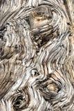 Деревянная предпосылка расшивы Стоковые Изображения RF