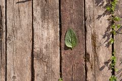 Деревянная предпосылка состоит из старых деревянных планок Зеленый лист лежит на досках стоковые изображения