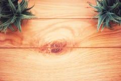Деревянная предпосылка с алоэ Стоковая Фотография