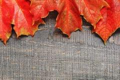 Деревянная предпосылка с красными листьями Стоковая Фотография RF