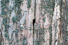 Деревянная предпосылка с отверстием в ем Стоковая Фотография RF