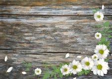 Деревянная предпосылка с стоцветом стоковое фото