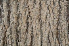 Деревянная предпосылка дерева Стоковое фото RF