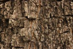Деревянная предпосылка кожи текстуры Стоковые Изображения RF
