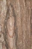 Деревянная предпосылка конспекта текстуры Стоковое Изображение RF
