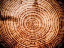 Деревянная предпосылка отрезка Стоковое Изображение