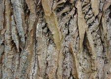 Деревянная предпосылка расшивы старого дерева вербы Стоковые Изображения