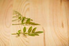 Деревянная предпосылка с аранжированными зелеными листьями Стоковые Изображения RF