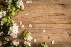 Деревянная предпосылка с ветвью цветения яблони, шаблоном открытки Стоковое Изображение