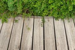 Деревянная предпосылка с заводами Стоковое фото RF