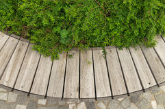 Деревянная предпосылка с заводами Стоковое Изображение