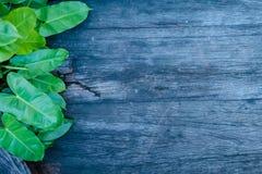 Деревянная предпосылка с зелеными листьями стоковые изображения rf
