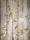 Деревянная предпосылка с зелеными лист Стоковое фото RF