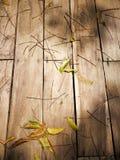 Деревянная предпосылка с зелеными лист Стоковые Изображения
