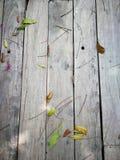 Деревянная предпосылка с зелеными лист Стоковые Изображения RF