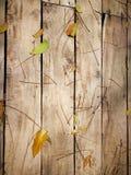 Деревянная предпосылка с зелеными лист Стоковые Фото