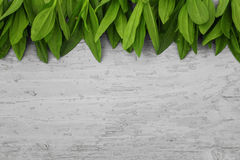 Деревянная предпосылка с рамкой зеленых листьев Стоковая Фотография RF