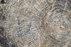 Деревянная предпосылка Текстура пня вала Стоковые Фотографии RF